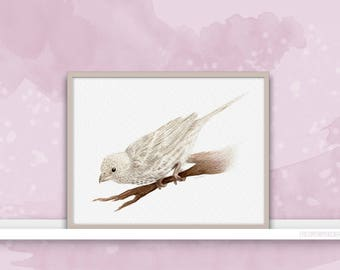 House Finch {Birds of my heart} Watercolor Illustration & Painting Art Print