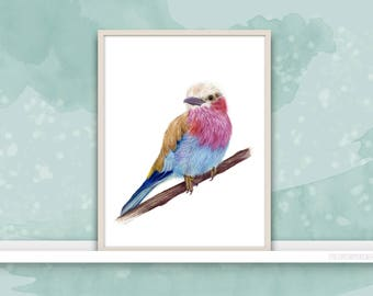 Lilac-Breasted Roller {Birds of my heart} Watercolor Illustration & Painting Art Print
