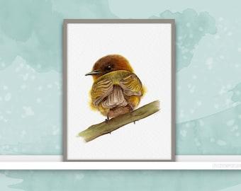 Cinnamon Flycatcher {Birds of my heart} Watercolor Illustration & Painting Art Print