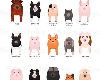 """15 pig breeds, svg, png, jpg, 16*20"""""""