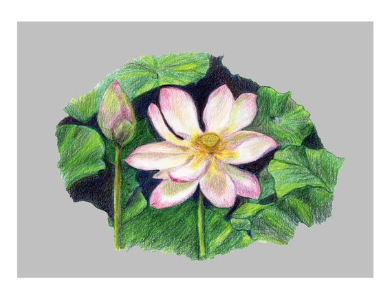 Lotus of Peace ~  Set of 4 ~ blank note card drawn by: Joy Bollard (Aroma Joy Naturals)