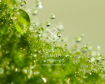 Shimmering Chartreuse - Dreamy Golden Green Bokeh Water Droplets, Macro, Fine Art Photography, Prints, Wall Art, Home Decor, Unique, Gift