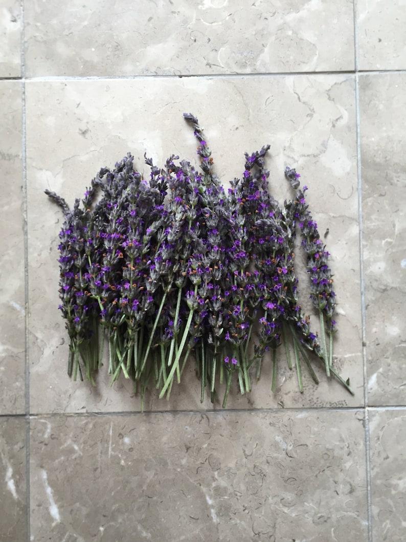 Organic Natural Air Dried California USA Lavender image 0