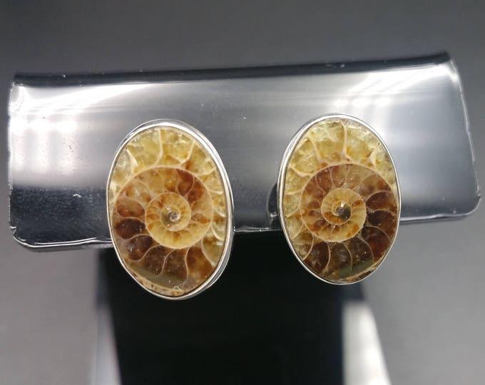 Ammonite Fossil & Heavyweight Sterling Stud Earrings 240 Million Years Old