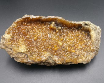 Agatized Coral Fossil 80 Million Years Old - Huge Stunning Mineral Formations and Color
