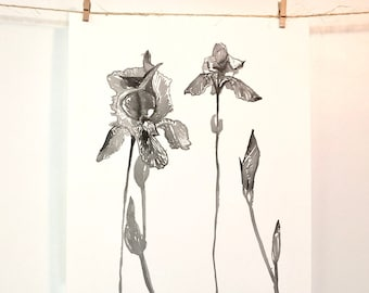 Ink Iris Painting, Iris Art, Iris, Iris Painting, iris gift, floral watercolor, floral art, garden art, Iris Illustration, Flower, Floral