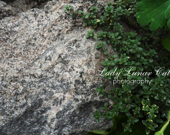 Grey Stone photo Plant Photography Background photo Digital Photography Desktop wallpapers Art Photography Stock photography Fine art photo