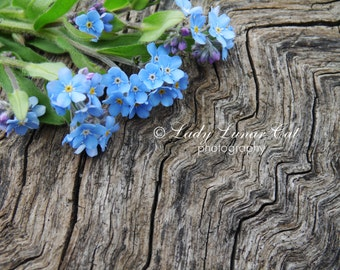 Forget-me-not photo Blue flowers Photo Wood photo Background Photography Desktop wallpaper Digital Photography Greeting card Art Photography