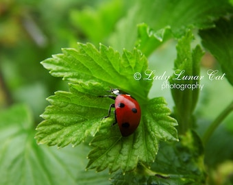 Ladybug  photo, Green leaf photo, Spring photo, Background photography, Desktop wallpaper, Digital Photography, Greeting card, Art Photo