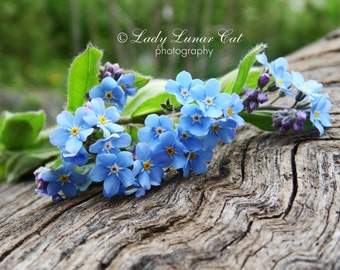Forget-me-not bouquet photo Blue flowers Photo Wood photo Background Photo Desktop wallpaper Digital Photography Greeting card Art Photo