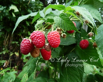 Berries photo Raspberry photo Pink green photo Garden photo Kitchen wall art Colorful Fruit Decor Nature photography Foodie print Still life