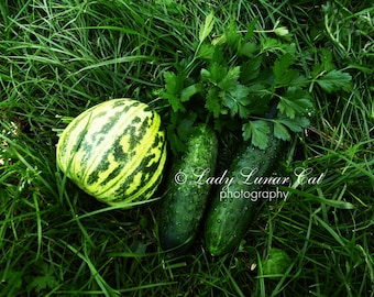 Green still life photo Green Vegetables photo Harvest photo Kitchen art decor Rustic food Autumn gifts Food Photography Fine art photo