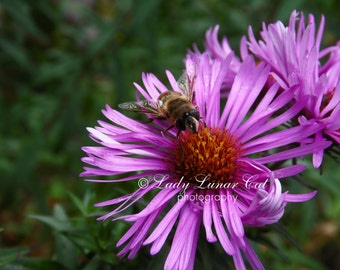 Bee on pink flower photo Fine Art Photography Flower garden photo Bee photo Insect photography Nature wall art Nature photo Flower photo