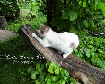 White cat photo  Stock photography  Desktop wallpapers  Digital Photography Art Photography Fine Art Instand digital Art Photography