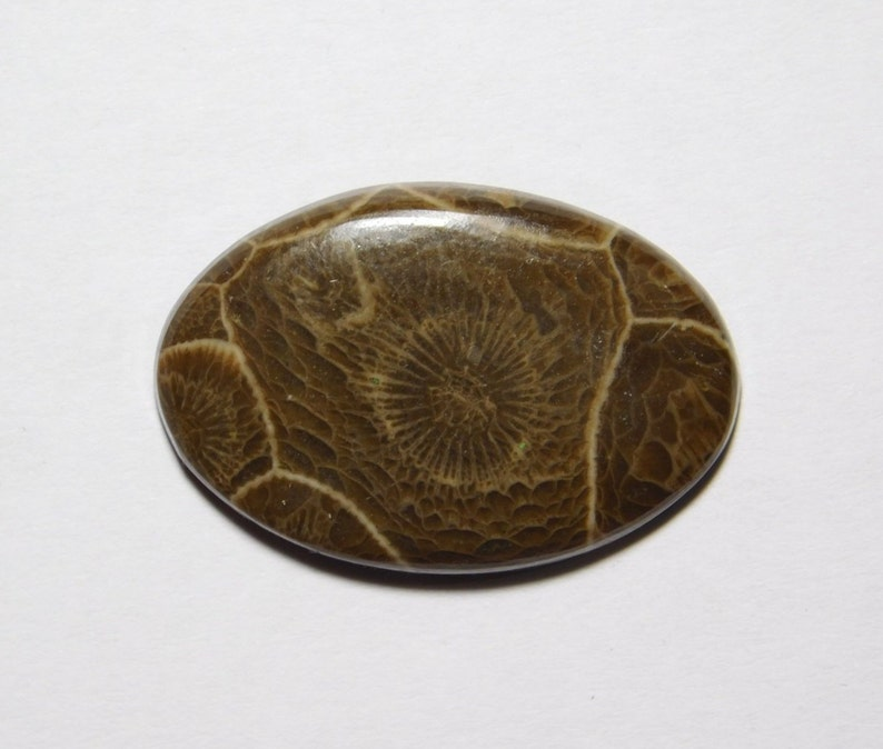 Amazing Fossil Coral loose stone Fossil Coral gemstone R-8368 semi Precious Gemstone 19 Cts Top Quality Natural fossil coral cabochon