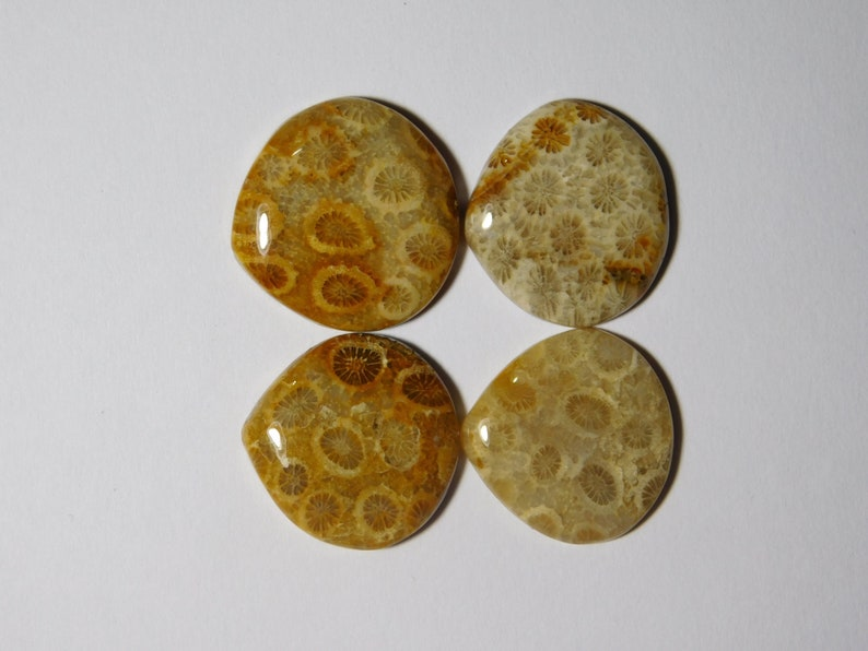 R-8861 Fossil Coral Gemstone For Jewelry 61 Cts 100/% Natural Fossil Coral Cabochon Gemstone Glorious 04 Pcs Lot Fossil Coral Loose Stone