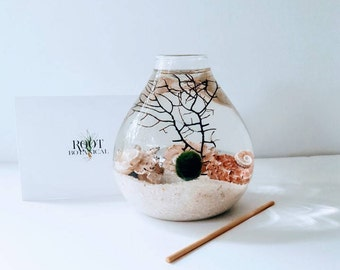Japanese Marimo Moss Ball Aqua Terrarium, Pink Urchin Teardrop Terrarium, Home Decor, Office Decor, Unique Gift
