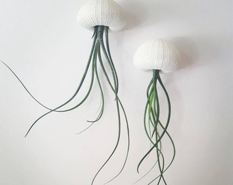 """Two """"Butzii"""" Jellyfish Air Plants, Hanging Air Plants in Sea Urchin Shell"""