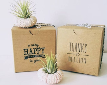 Two Air Plants Mounted in Pink Urchin Shells, Stamped Gift Box, Happy Birthday, Thank You, Love You To The Moon And Back