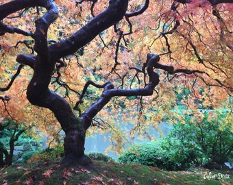 Colorfull tree at the Japanese Gardens, Portland, OR
