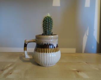 Indoor Cactus Palnt