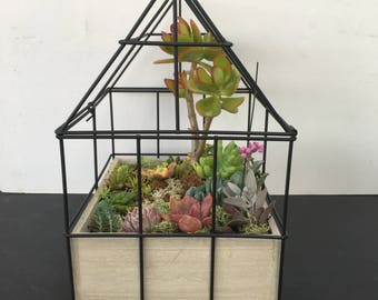 SUCCULENT HOUSE KIT - Succulent Gift, Gift for Plant Lover, Send with love, Unique Gift, Beautiful Succulent