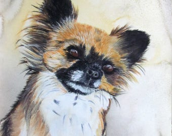 shag - animal art - Chihuahua dog portrait
