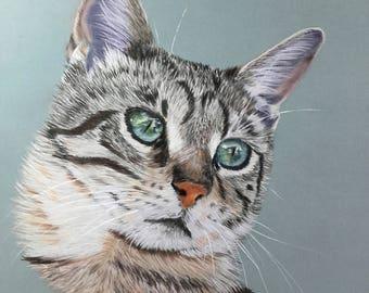 Green cat - animal art - animal painting - wildlife-pastel