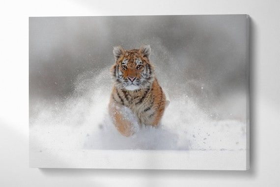 Tiger in the snow leather print/Large wall art/Tiger canvas/Tiger wall art/Multi panel print/Made in Italy/Better than canvas!