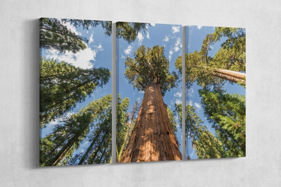 3 Pieces Huge Redwood Tree Sequoia National Park, California Leather Print/Large Wall Art/Large Wall Decor/Made in Italy/Better than Canvas!