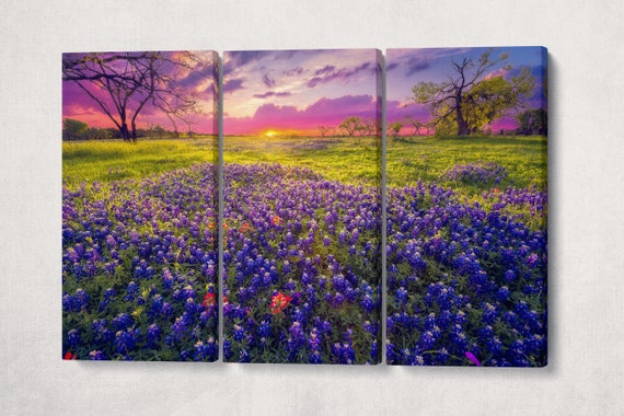 Texas Hill Country at Dawn Framed Canvas Leather Print