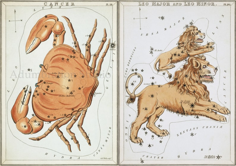 Celestial Map Archival Prints Astrological Constellations Horoscope 13 Petite Prints The Thirteen Signs of the Zodiac Folio Gift Set