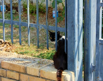 Cat at the Gate