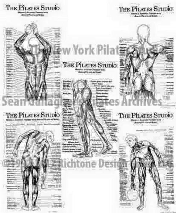 Pilates-Anatomie-Poster-Set | Etsy