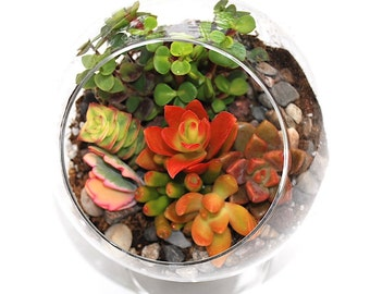 Succulents Terrarium Kit Glass Globe with Pedestal DIY