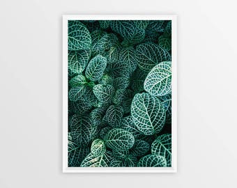 LEAF WALL ART Print,  Floral Print,  Plant Print, Botanical Wall Art, Leaves Photography, Plant Photography, Printable Wall Art