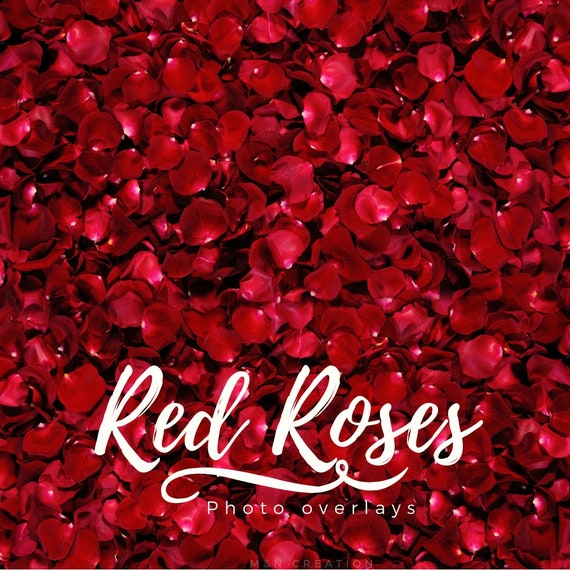 Bed Of Red Roses Digital Backdrop Instant Download Newborn Etsy