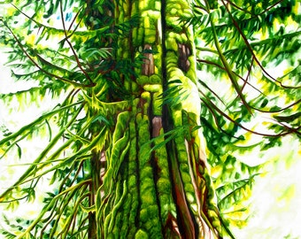"""Tree print, 8x10 inch matted print from original oil painting """"Old Growth Cedar"""" by Sheryl Sawchuk"""