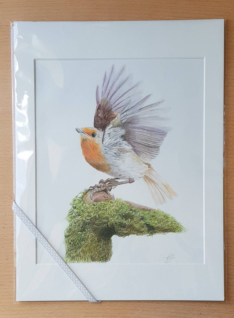 Robin Picture Minimalist Fine art Illustration of a Robin in flight with 12 inch by 16 inch mount