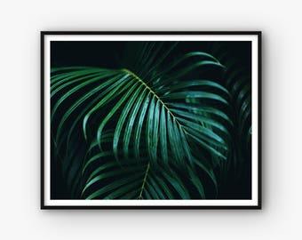 Palm Leaves Wall Art, Botanical Print, Printable Palm Poster, Botanical Wall Art, Green Leaf Decor, Plant Print, Leaves Photography