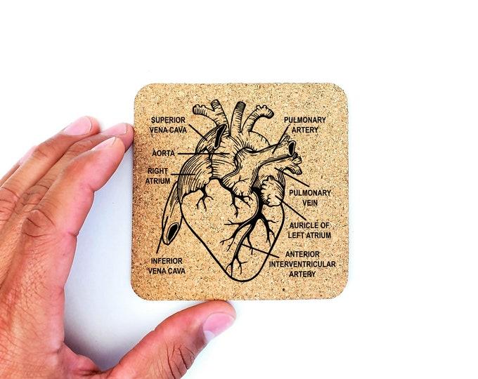 Anatomical Heart Science Biology Medical School Cork Coasters