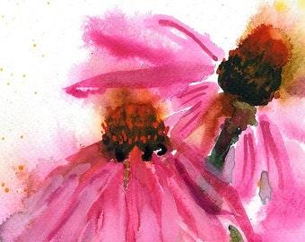 Echinacea/Cone Flower