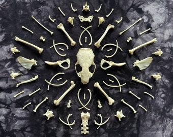 Bone Mandala, Bone Art, Bone Home Decor, Goth Decor, Creepy Home Goods, Spooky Home Goods, Oddities