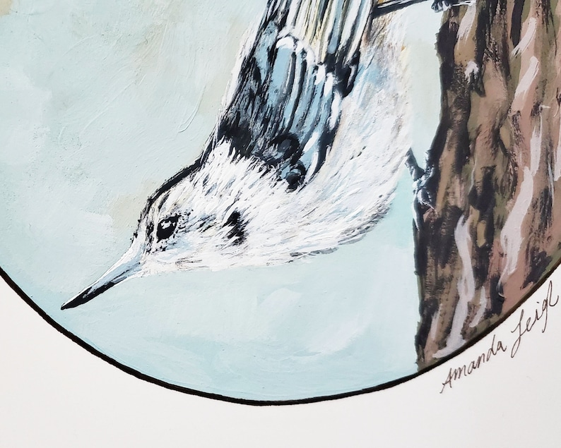Ink Original White-Breasted Nuthatch Bird Illustration Painting Gouache 9x12