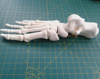 Foot model (featuring removable spring ligaments)