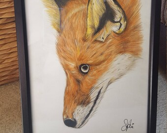 Fox drawing - Framed
