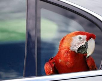 Red macaw parrot decal parrot car sticker 3d car decal bird | Etsy