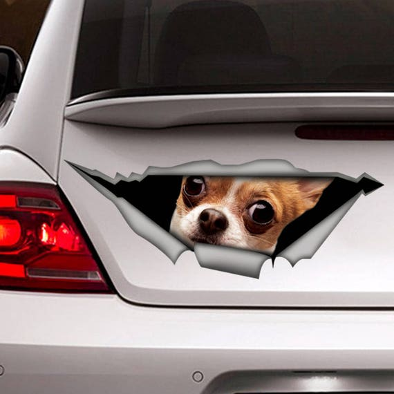 Funny Chihuahua Car Decal 3d