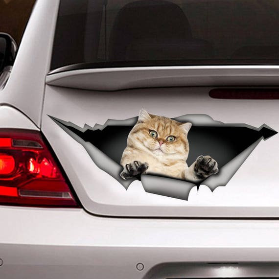 Golden shaded british shorthair cat decal, cat car decal, funny sticker,  cat car sticker