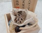 Scaly Cracked Head Skull Japanese Art Sculpture(Not Netsuke) Deer Antler Carving with box-set signed 髑髏作家服部 髑髏彫刻 無窮